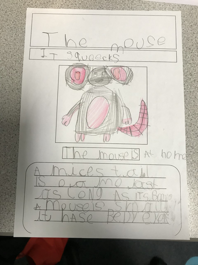 We wrote some great information posters about mice - inspired by Harry our class pet mouse