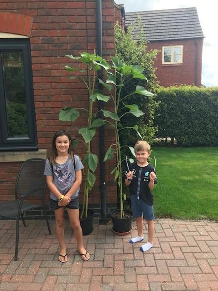 Check out Sophie's Sunflower