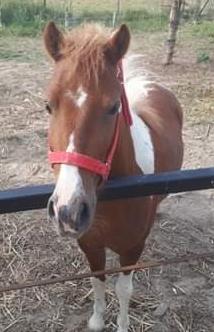 The pony near to Ignacy's Grandad's