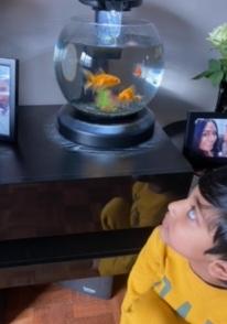 Romero's goldfish