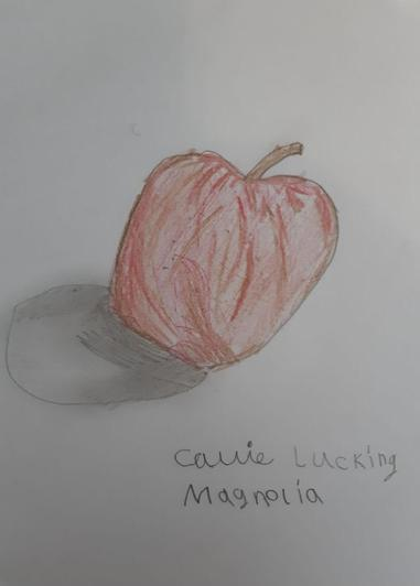 Amazing red apple with shadow by Callie in Magnolia