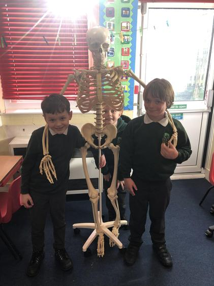 He helped us to learn about the different joints and how they move.
