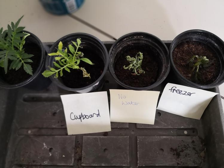 What do plants need to grow well?