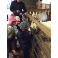Farm Visit - Feeding the animals