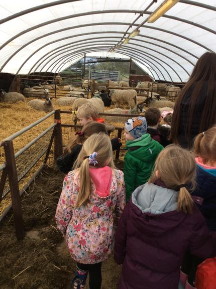 We enjoyed learning about the animals on the farm.