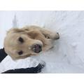Mrs Baker's snow dog