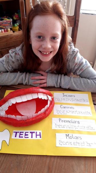 Freya's model of a mouth