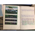 Year 5; Layers of the rainforest