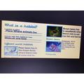 Year 2; World habitats