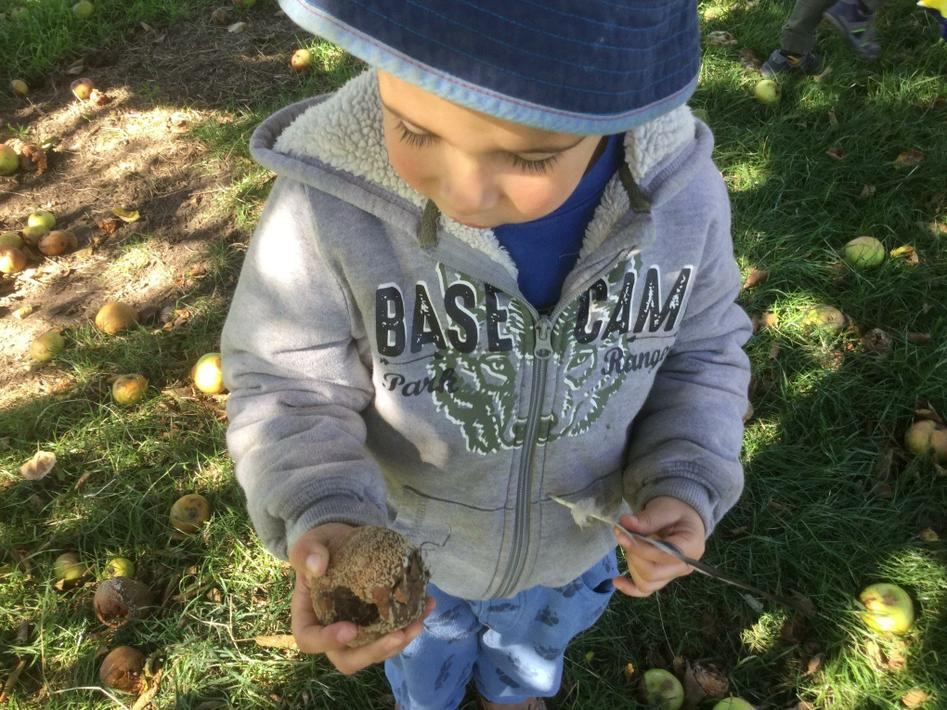 Finding walnuts and apples