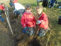 Year 5 Tree Planting in Harmony Woods. 9