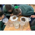Y3: We investigated different types of soil