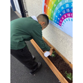 Y3 learn about soil and  plant bulbs in our playground