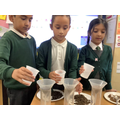 Y3: We did a fair test to see which soil was more impermeable