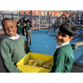 Y3: Compost added! We will observe overtime the changes to the compost.