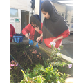 Green-fingered Y6 pupils planting hyacinth bulbs and discussing how to grow healthy plants