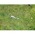 A dead rat...littering is not helping!