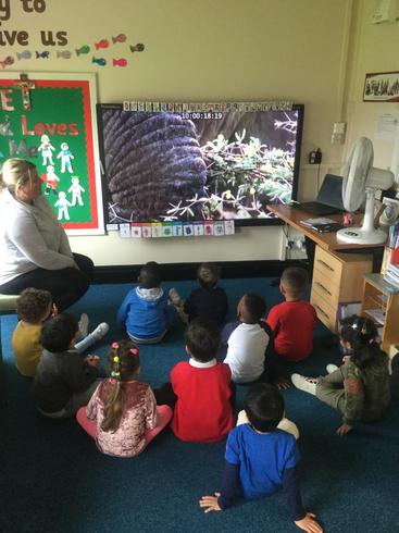 The children wanted to see more elephants so we found clips on the BBC.