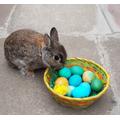 Emma's Easter Bunny! Adorable!
