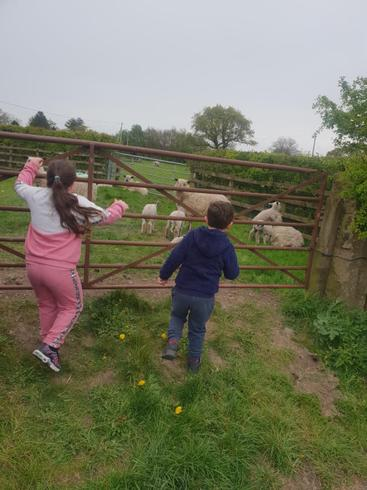 Christopher found some sheep on his walk!