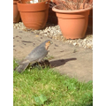 A sparrowhawk visited Arwa!