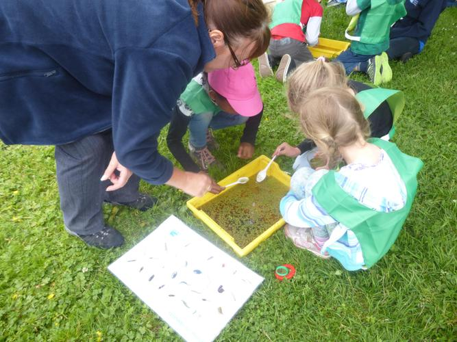 Pond dipping............