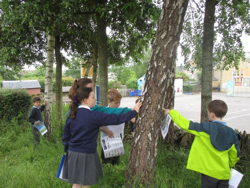 Our tree surveys