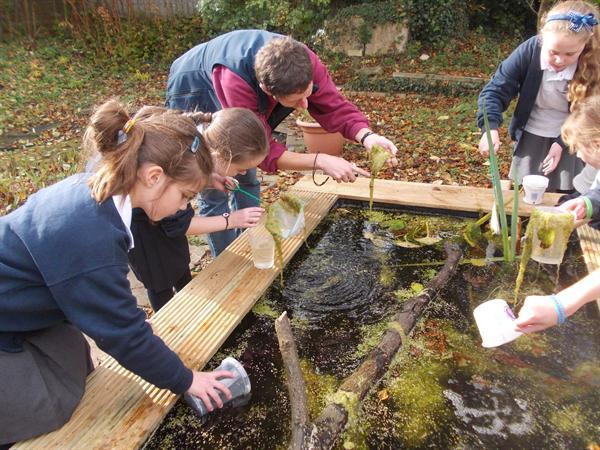 Pond dipping in our new pond.