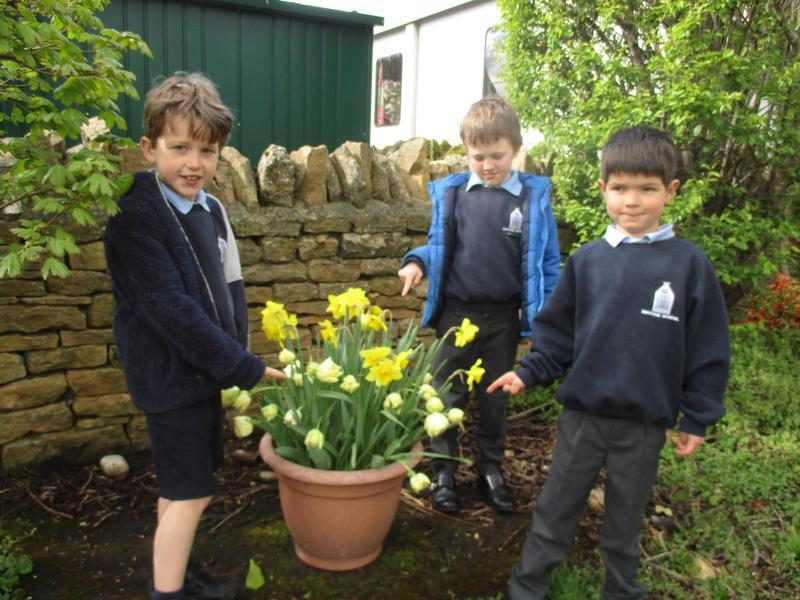 Wonderful bulbs we planted!