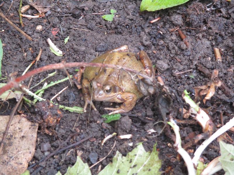 A Frog Friend!