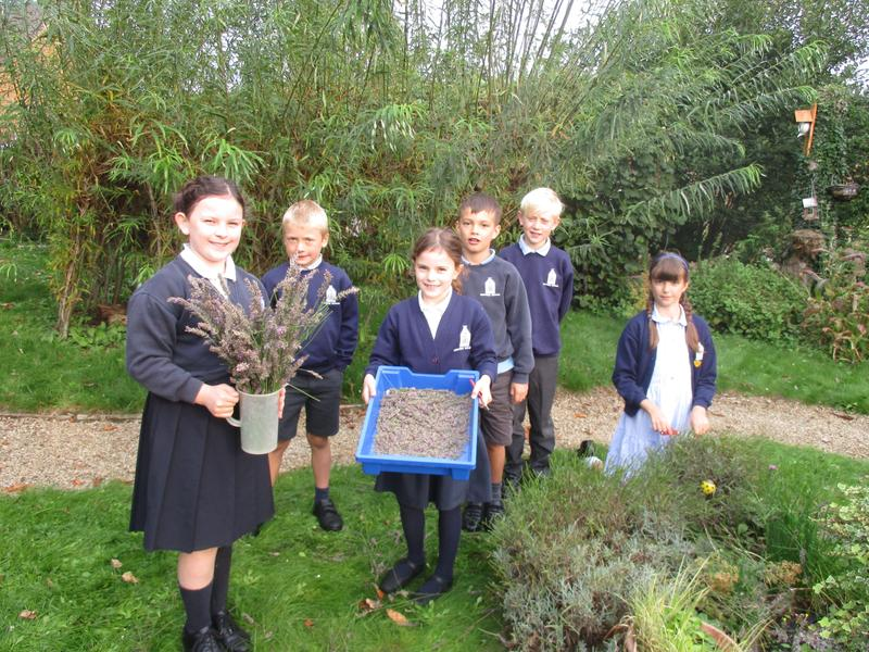 Lavender for our classrooms