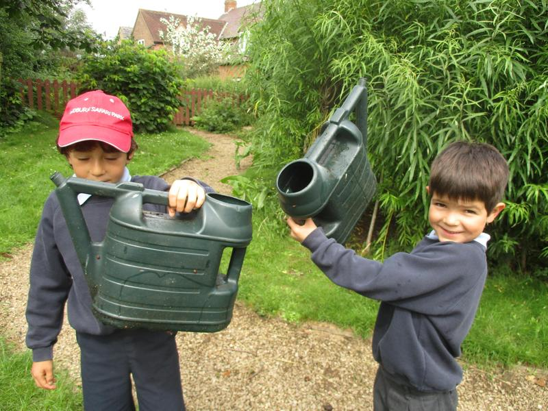 Larvae on the watering cans!
