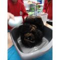 Scrubbing every bit of the gorilla...