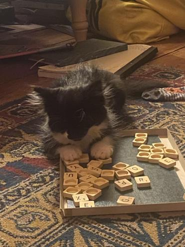 Sam's kitten loves to play Scrabble!