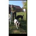 Mrs Clinch loves walking her dogs on her farm.