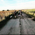 Miss Silcox loves taking her dogs for long walks in the countryside.