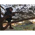 W loves climbing trees.