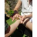 Bye butterflies