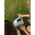 Counting daisy footprints.