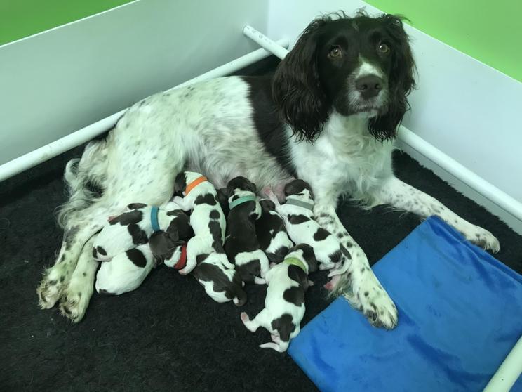 Jayden's dog with her puppies.