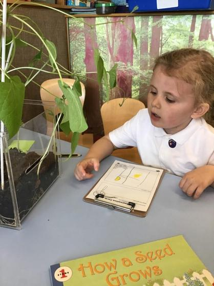 We ask questions and talk about the different things we notice in our Curiosity Area.