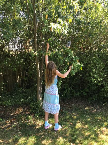 Lily finding some leaves for her art work.