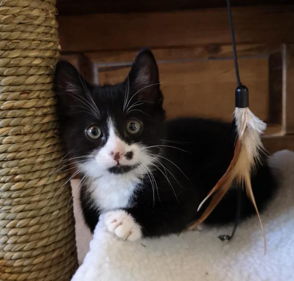 Ben has a new cat called Lochie!
