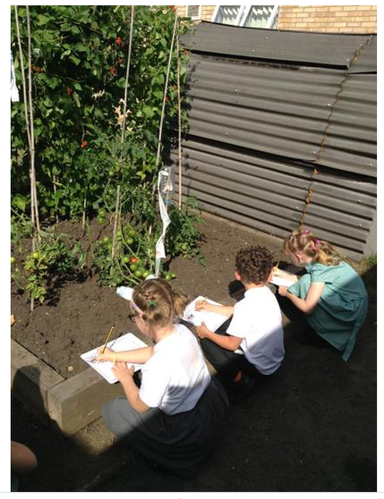 Year 3- Learning about Creation