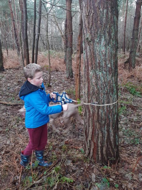 Walter measuring trees