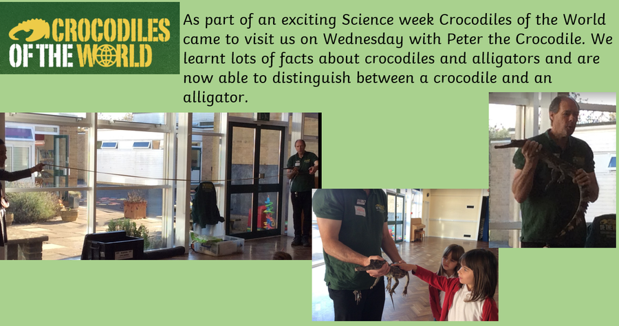 Crocodiles of the World Visit Tuesday 3rd November
