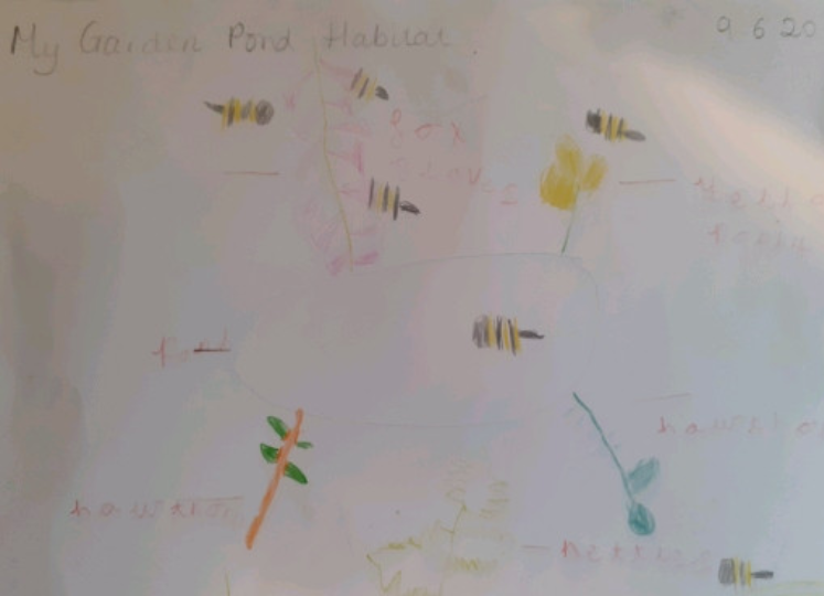 Ava has been busy drawing a wild habitat!