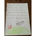 Why Harper likes sheep!