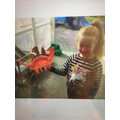 Grace use her instructions to make her crab.