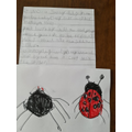 Harper wrote a ladybird story.